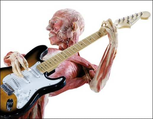 bodyworlds_guitar