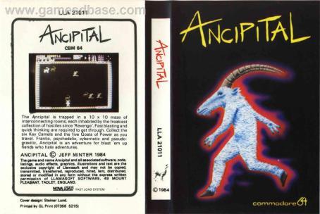 Ancipital