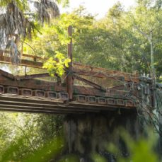 pandora-the-world-of-avatar-bridge-615x346