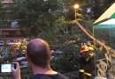 La caída de una rama se salda con seis heridos leves en Zarzaquemada