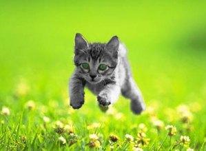 kitten_0