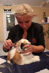 Стижка кошки