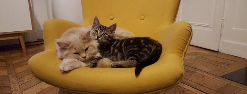 accueillir nouveau chat à la maison