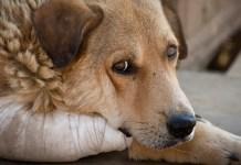El maltrato animal: ¿un delito contra el patrimonio?
