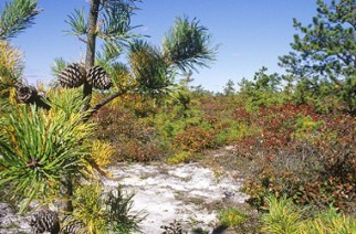 Assemblyman looking to protect New York's Pine Barrens