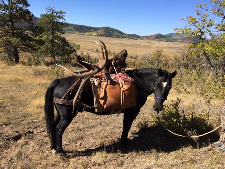 Pack_Horse_Photo_By_Hank_Anstine.JPG