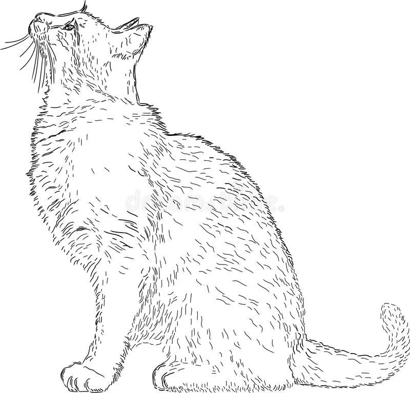 Obrázky veľké chlpaté mačička