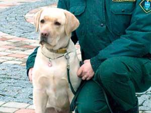 Служебные собаки обнаружили несколько случаев недекларирования наличных денег