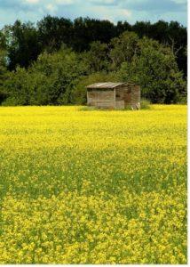 Une cabane...en Mayenne