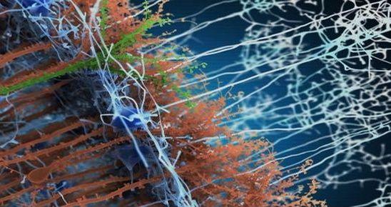 Capture d'écran - Laboratory / CNRS UMR3571 Paris 6 - Perception et mémoire Département de Neuroscience