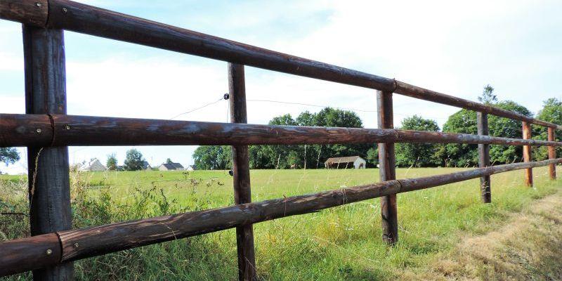 Chevaux sur des terres agricoles à Bonchamp en Mayenne