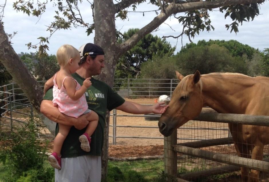 feather acres nursery horses
