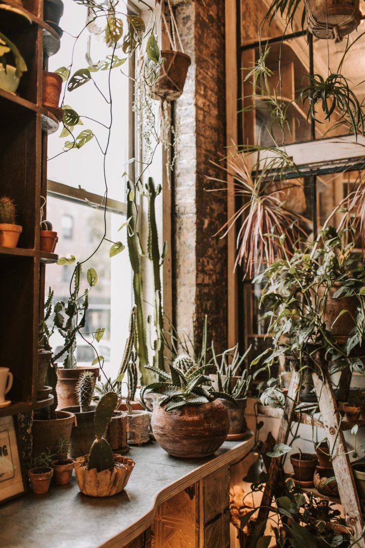 quelles expositions pour les plantes