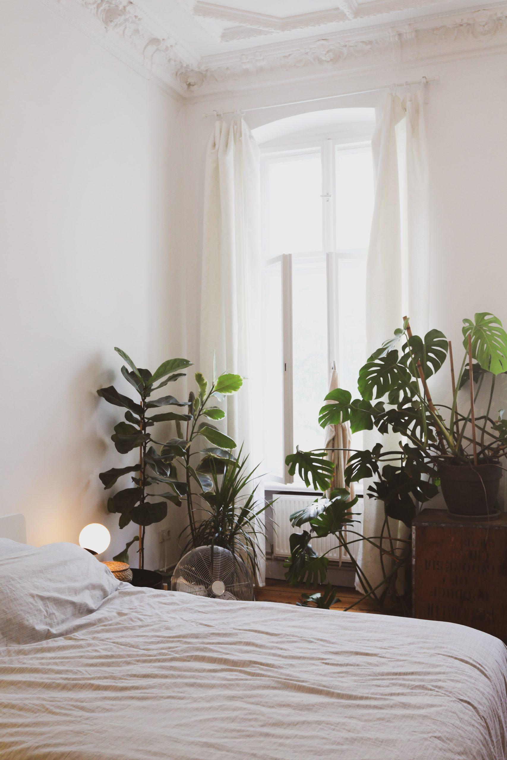 puis-je mettre des plantes dans ma chambre