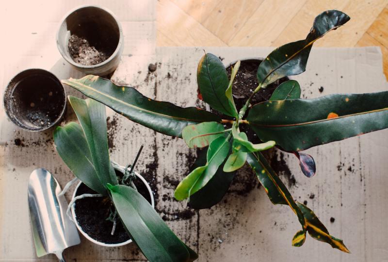 Arroser ses plantes