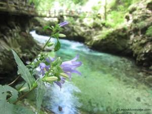 Vintgar Gorge - Slovénie