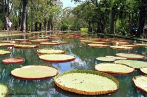 Jardin Pamplemousse - Ile Maurice