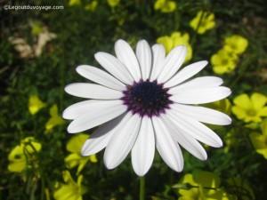Fleurs en Andalousie