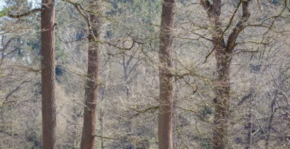 Balade forestière