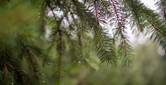Petite balade dans les bois