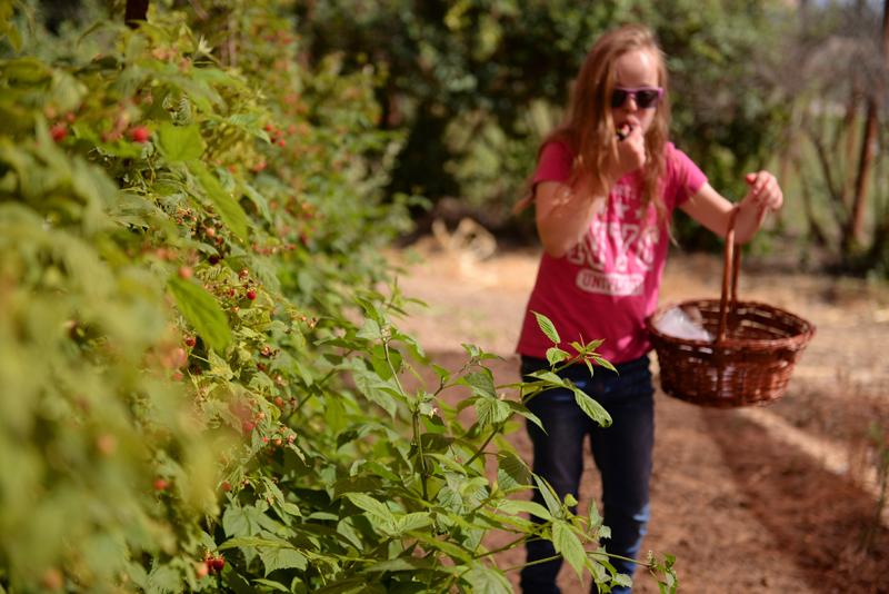 קראמבל תפוחים פטל