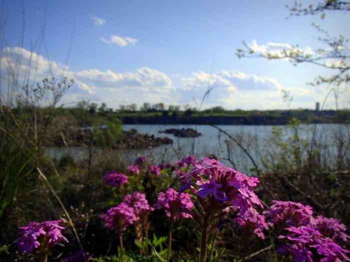 Lehigh Portland Trails Spring