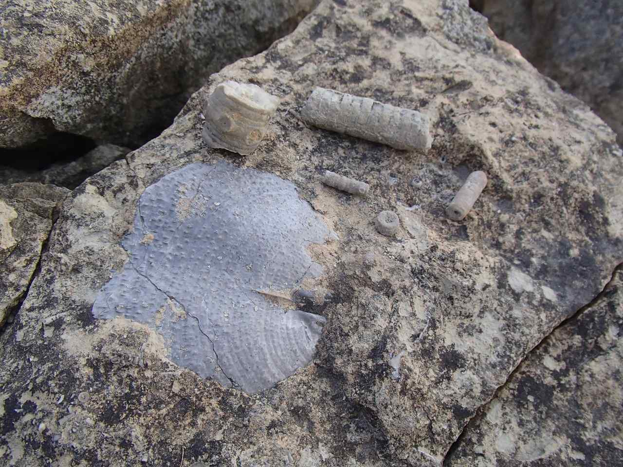 Fossils at Lehigh Portland Trails