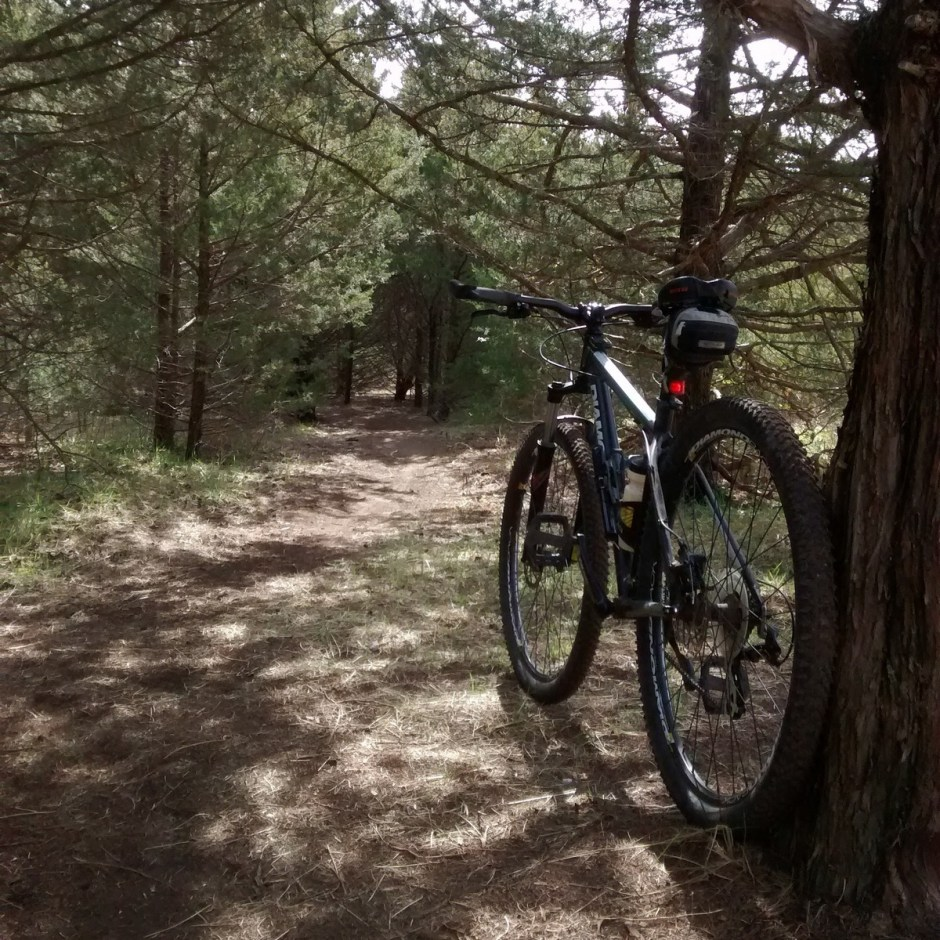 The trail begins with a ride through dense cedar trees. It's an easy route, but if you want to increase the challenge, just go faster!