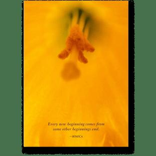 quote-daffodil-seneca