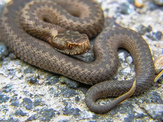 Первая медицинская помощь при укусе змеи