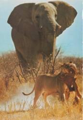 Szene in Kenia, eines der besten Bilder von Heinz Sielmann