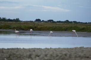 L1060345-klein-flamingo