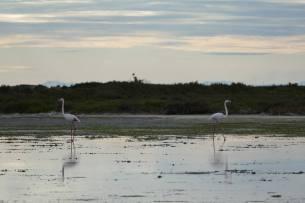 L1060374-klein-flamingo