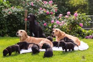 hundefamilie-klein