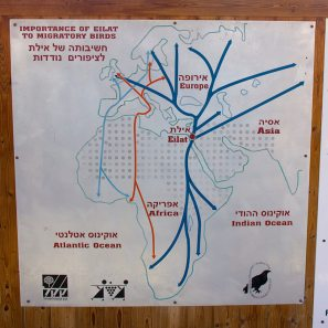 Migration-schema-East-Africa-Europe-Flyway-IMG_4673-Copyright-Birdlife-International