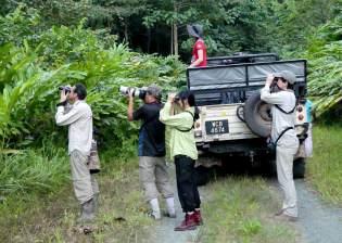 Deramakot-watching-orang-Borneo-2017-1-klein
