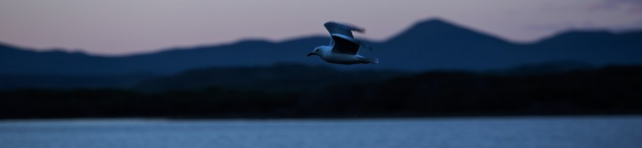 2_Gull-flying-along-the-Cape-Town-mountains.jpg-Kopie-klein
