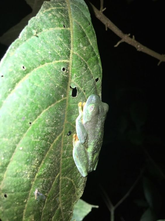 13-Red-eyed-Treefrog-769x1025-1