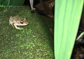 8-Rain-Frog-1025x727