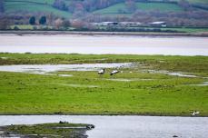 Blog-cranes-landing-1025x683