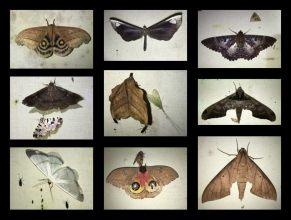 Moth-mix-1025x776
