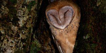 Beitrag-owl