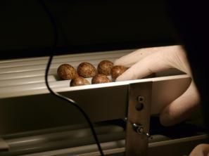 SBS-eggs-in-incubator-Martin-McGill-WWT-1025x769
