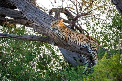 Belmond_Botswana_Lodge_www.marcstickler.at-68_klein