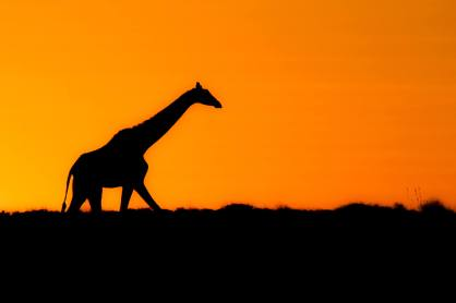 Botswana_Marc-Stickler-(4-von-7)_klein