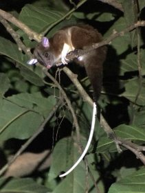 27-Central-American-Wooly-Opossum-769x1025