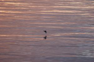 Landing op zee bij middernachtzon