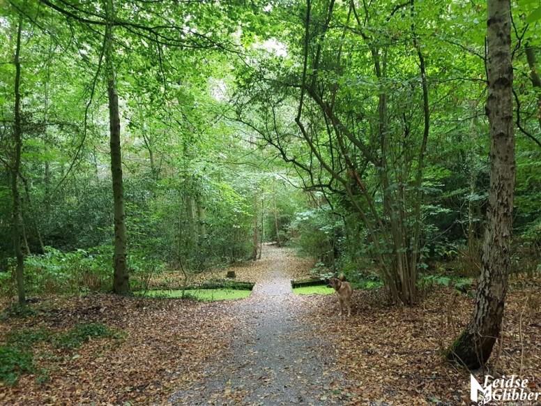 Groene herfst in augustus (3)