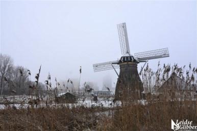 Sneeuw 31 januari (19)