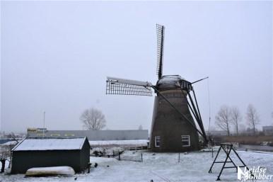 Sneeuw 31 januari (18)
